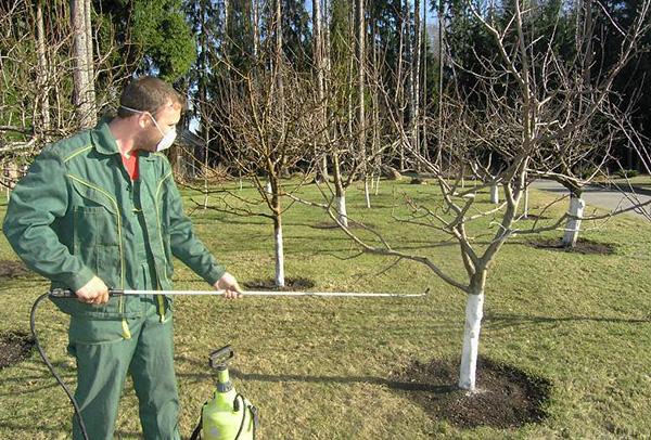 Как правило, самостоятельная обркаботка садового участка от клещей дает меньший эффект, чем привлечение профессионалов.