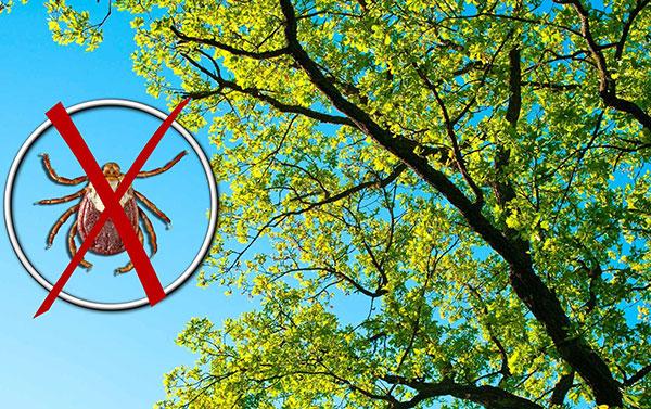Клещи не забираются на деревья