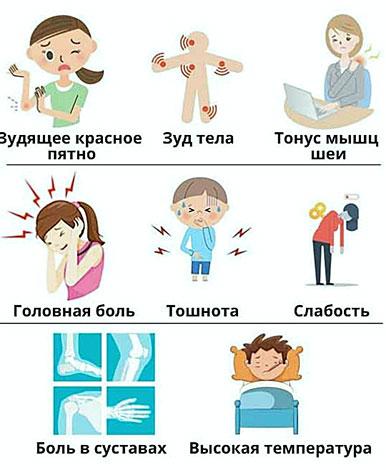 Признаки заражения клещевым энцефалитом