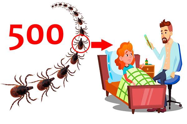 Один из пятисот клещей может быть переносчиком энцефалита