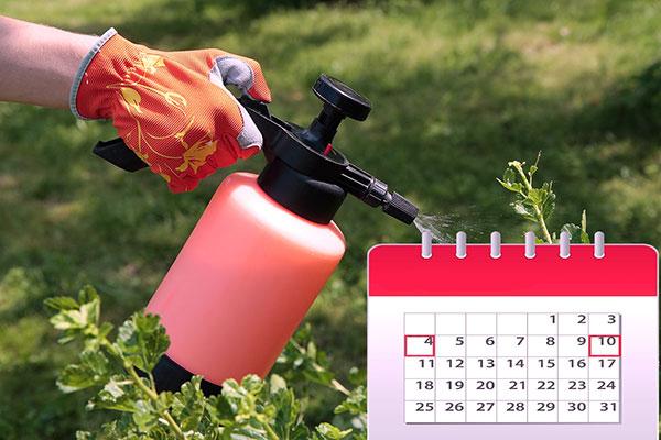 Повторная обработка растений от паутинного клеща