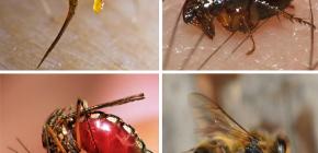Правила первой помощи при укусах насекомых: что нужно делать прежде всего