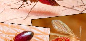 Укусы разных видов насекомых и их фотографии