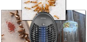 Обзор эффективных ловушек для летающих и ползающих насекомых