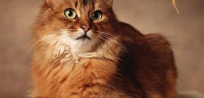 Как избавиться от блох у кота: лечим домашнего питомца самостоятельно