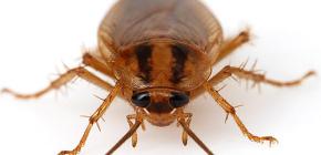 Фотографии различных тараканов