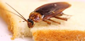 Как можно избавиться от тараканов в квартире