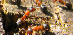 Как муравьи готовятся к зиме