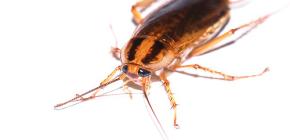 Эффективное средство от тараканов Глобал (Globol)