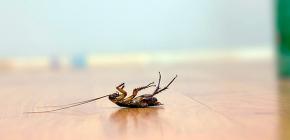 Выбираем эффективную отраву для тараканов