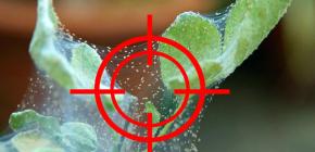 Выбираем эффективное средство от паутинного клеща