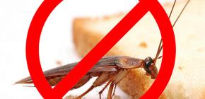 Уничтожение насекомых: полезные советы и важные нюансы
