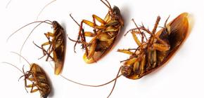 Заговоры против тараканов
