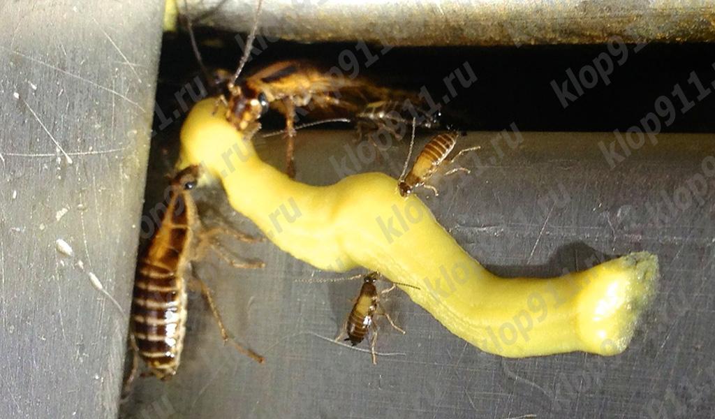 Тараканы поедают гель