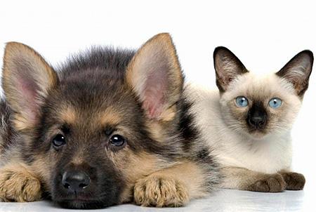 При использовании Карбофоса необходимо удалять из помещения всех домашних животных