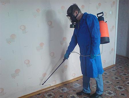 Дезинсекция от клопов профессионалами - самый эффективный метод избавления от насекомых