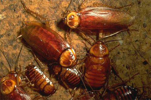 Личинки и взрослые особи ведут одинаковый образ жизни
