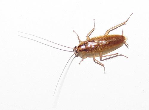 Боремся с тараканами в квартире
