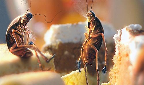 Тараканы в доме - это признак антисанитарных условий