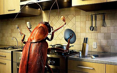 Чистота на кухне и в квартире в целом - залог успешной борьбы с тараканами