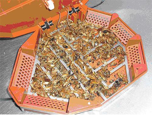 Мертвые тараканы в электрической ловушке