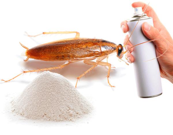 Выбираем средство от тараканов в квартире...