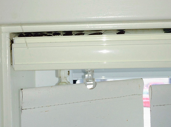 Инсектицидный аэрозоль легко приникает даже в труднодоступные места, где зачастую скрываются тараканы.