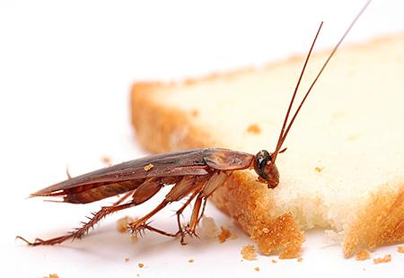 Важно ограничить доступ тараканов к еде и воде