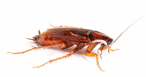 Рассмотрим 10 вариантов избавления от тараканов в квартире