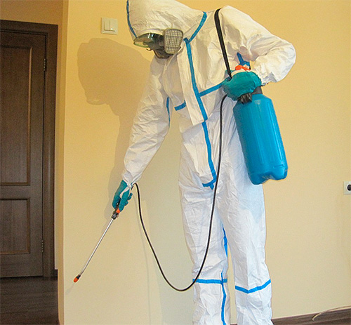 Дезинсектор обрабатывает квартиру от насекомых