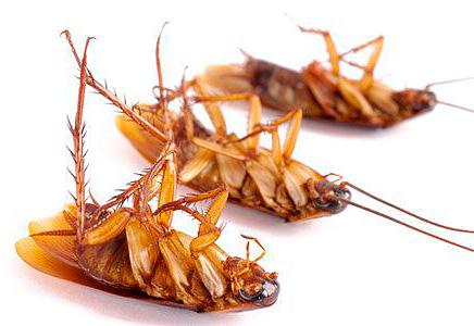 Мороз эффективно уничтожает тараканов в квартире