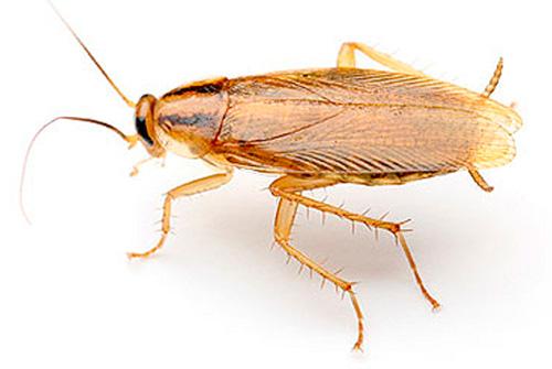 Ультразвук тараканов особо не тревожит