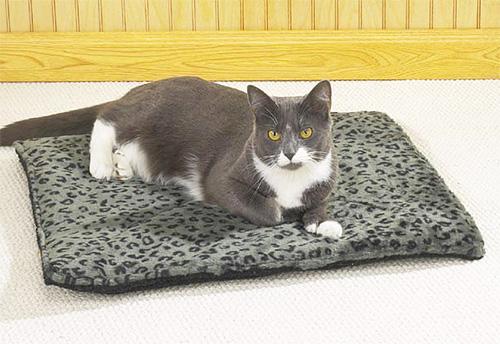Блохам совсем не понравится, если внутри подушки для кошки будут сосновые опилки