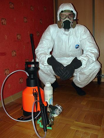 Специалисты службы дезинсекции все работы по избавлению от земляных блох в доме могут провести за вас.