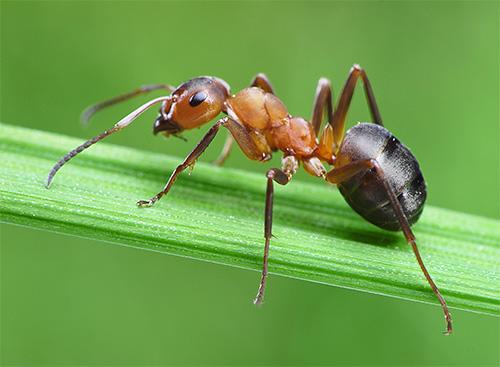 С жизнью муравьев связано немало интересных фактов