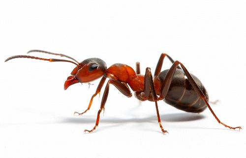 Разберемся, к чему могут сниться муравьи