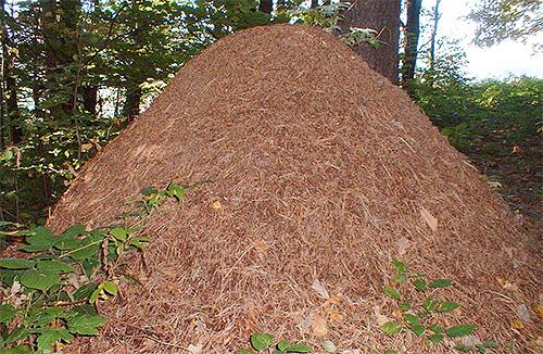 Разрушение муравейника во сне - плохой знак