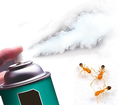 Сегодня существуют высокоэффективные инсектицидные аэрозоли, быстро уничтожающие муравьев