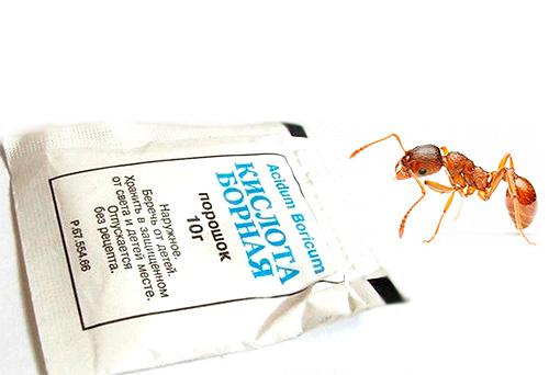 Борная кислота может быть использована для приготовления отравленных приманок, эффективно уничтожающих муравьев