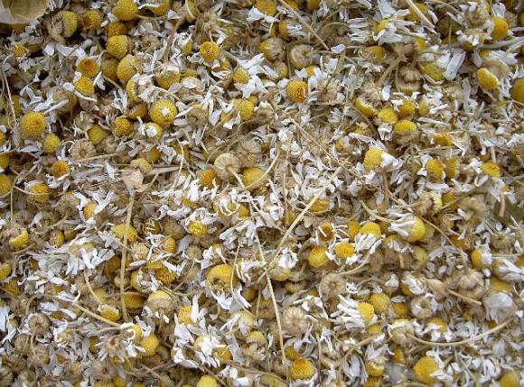 Сушить соцветия пиретрума нужно разложив их тонким слоем в темном месте