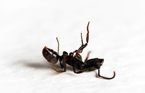 Те ультразвуковые приборы, которые могли бы отпугнуть муравьев, будут иметь сильный эффект и на человека