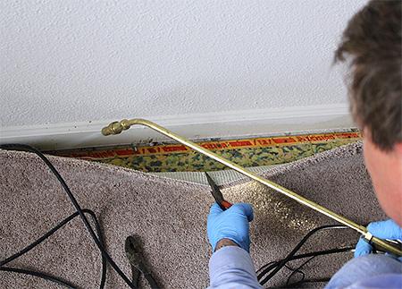 Обращение к профессиональным дезинсекторам является наиболее эффективным способом уничтожить муравьев в квартире