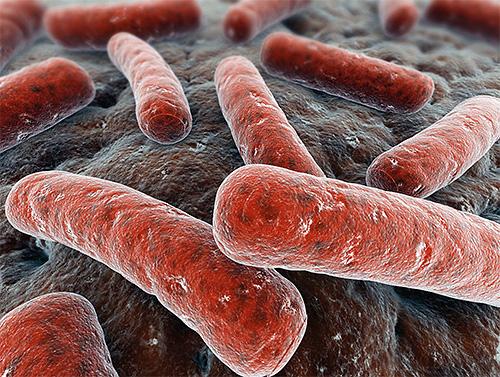 С точки зрения здравого смысла чудо-экстракт не сможет избирательно уничтожать только микобактерии, вызывающие туберкулез
