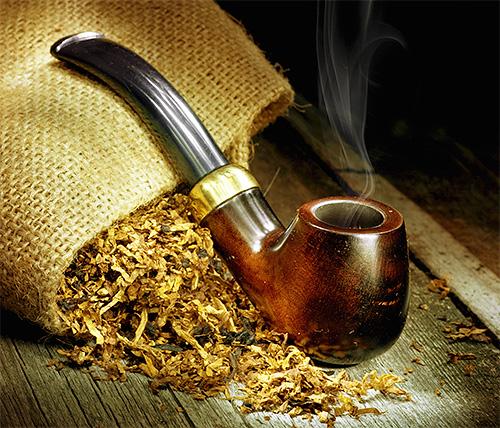 Моль также боится запаха табака