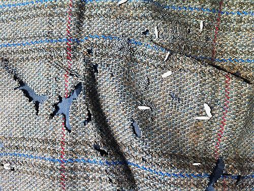 Каждая личинка моли - это новая дырка на любимом свитере или пальто