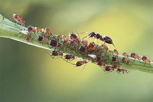 Даже жизнь привычных нам рыжих лесных муравьев полна интересных и не всем известных особенностей