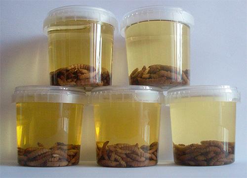 Настойка восковой моли выпускается в разной концентрации - в зависимости от соотношения массы личинок и спирта