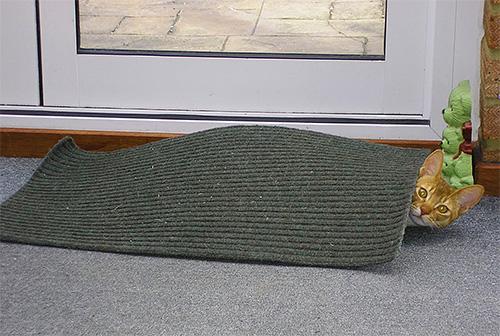 Для профилактики появления блох у питомца нужно регулярно вытряхивать все коврики и подстилку