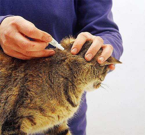 Надо стараться наносить капли не на шерсть, а на кожу животного