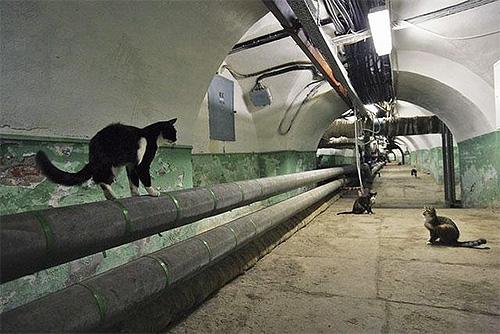 Кошки, живущие в подвалах, могут легко заражать блохами домашних питомцев